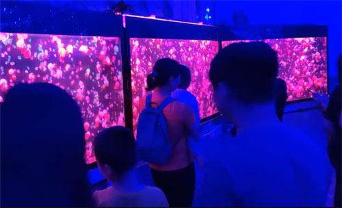 """江南环球海洋馆里面放几个鱼缸,就敢叫""""海洋馆""""?"""