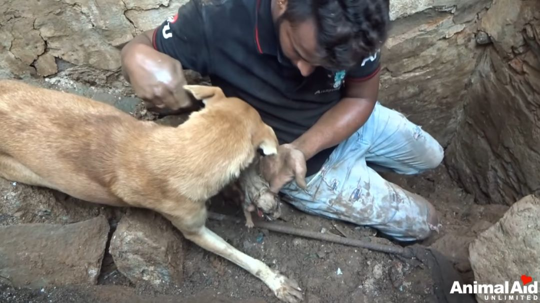 狗妈妈废墟中刨土救子:猫狗到底能有多懂爱?