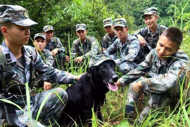 警犬训导员和警犬完成最后一次训练后,含泪退伍