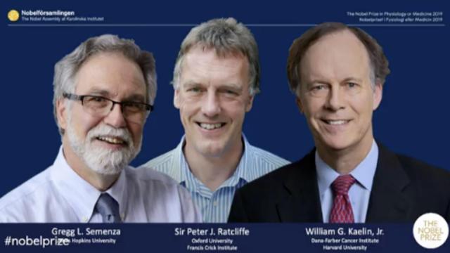 """发现细胞与氧气""""互动""""机制,3美英科学家获诺贝尔医学奖"""