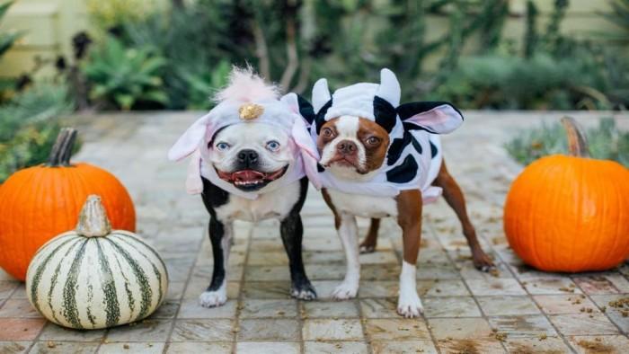 """微软发布""""Dogs in Disguise""""Win10免费4K高清壁纸包的照片 - 2"""