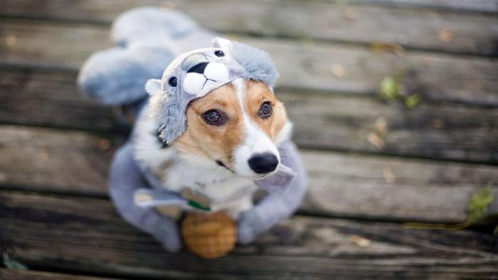 "微软发布""Dogs in Disguise""Win10免费4K高清壁纸包"