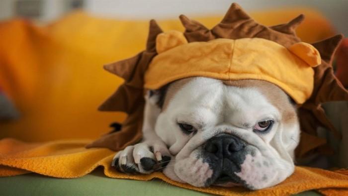 """微软发布""""Dogs in Disguise""""Win10免费4K高清壁纸包的照片 - 3"""