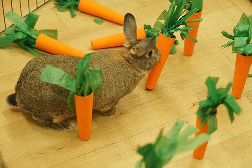 養兔經驗:小兔子為什么會拉軟便,兔子拉稀便是因為吃青菜嗎