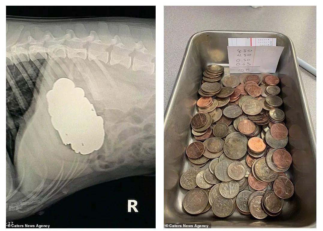 在狗狗的胃里,你找到过什么?