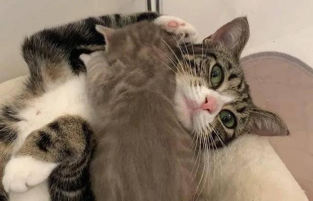 原創男子在車庫發現一窩小貓,卻不受貓媽待見,被救后才得知事情真相