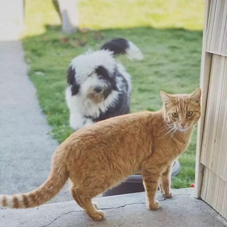 狗狗老往邻居家跑,原来是外边有了情人!