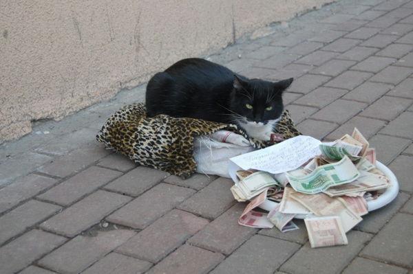從屠宰場救下的流浪貓,大媽想到個歪招,讓它自己上街賺罐罐