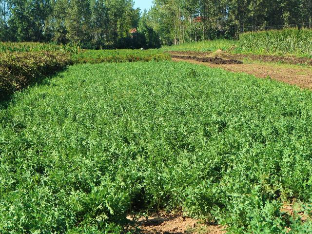 原創農民種植一種農作物,2畝收入10000元,秘訣在哪里?