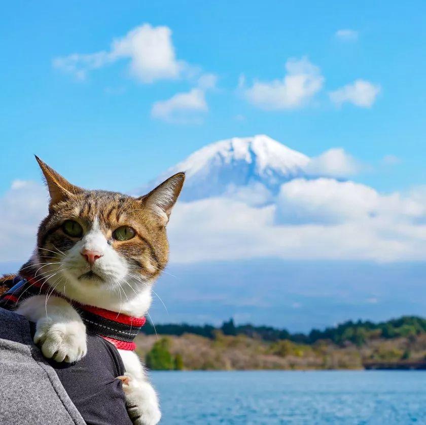 夫妇花了8年时间带着两只猫走遍日本,拍了一部旅猫日记火遍ins!