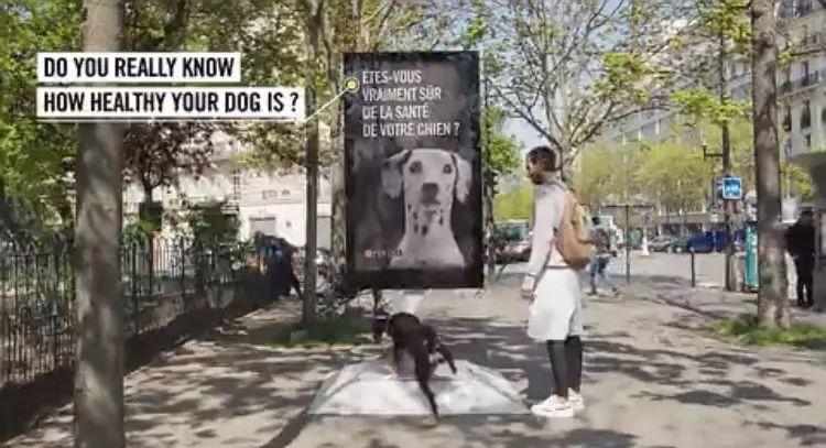 见过欢迎狗狗尿尿的广告牌吗?还能顺便给狗尿检
