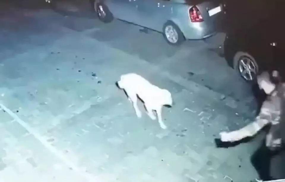 震惊!深夜街头,男子竟然对流浪狗做了这样的事