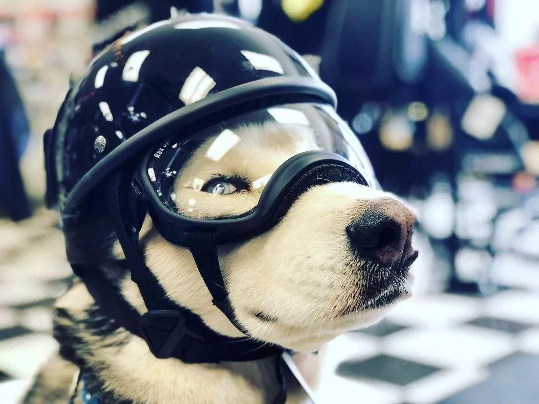 骑摩托的二哈很帅?一摘头盔,网友都笑了