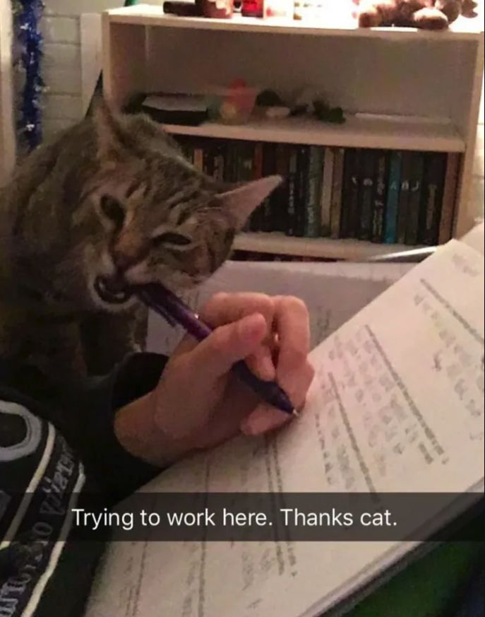 国外网友控诉养猫血泪史:上辈子造孽,这辈子养猫
