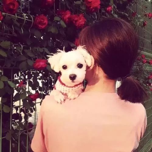从小仙女到女汉子,只隔了一条狗的距离