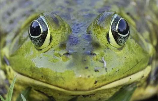 回不去的故乡之:青蛙忏悔
