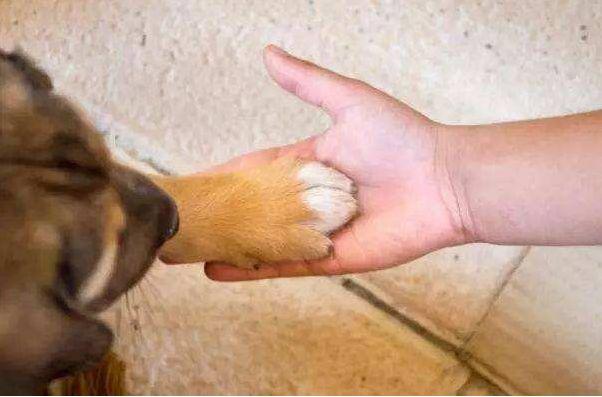 翻看老照片时,竟然看到了刚收养的狗…这就是缘分!