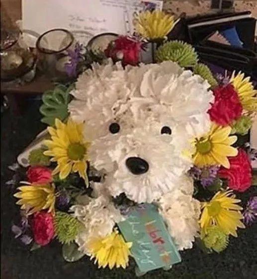 女朋友的爱犬去世,他送了这样一份礼物……