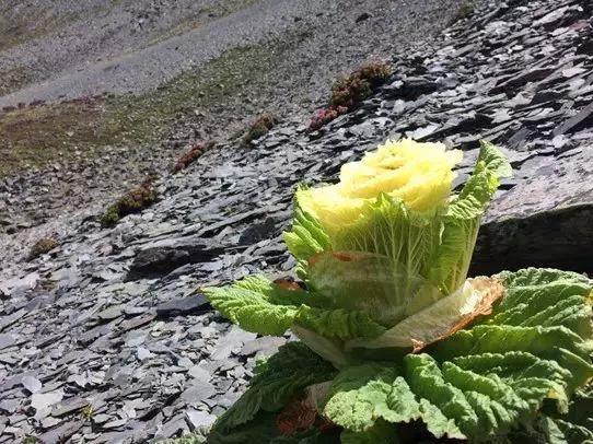 《影响世界的中国植物》美到让你重新认识大自然 豆瓣8.9的照片 - 9