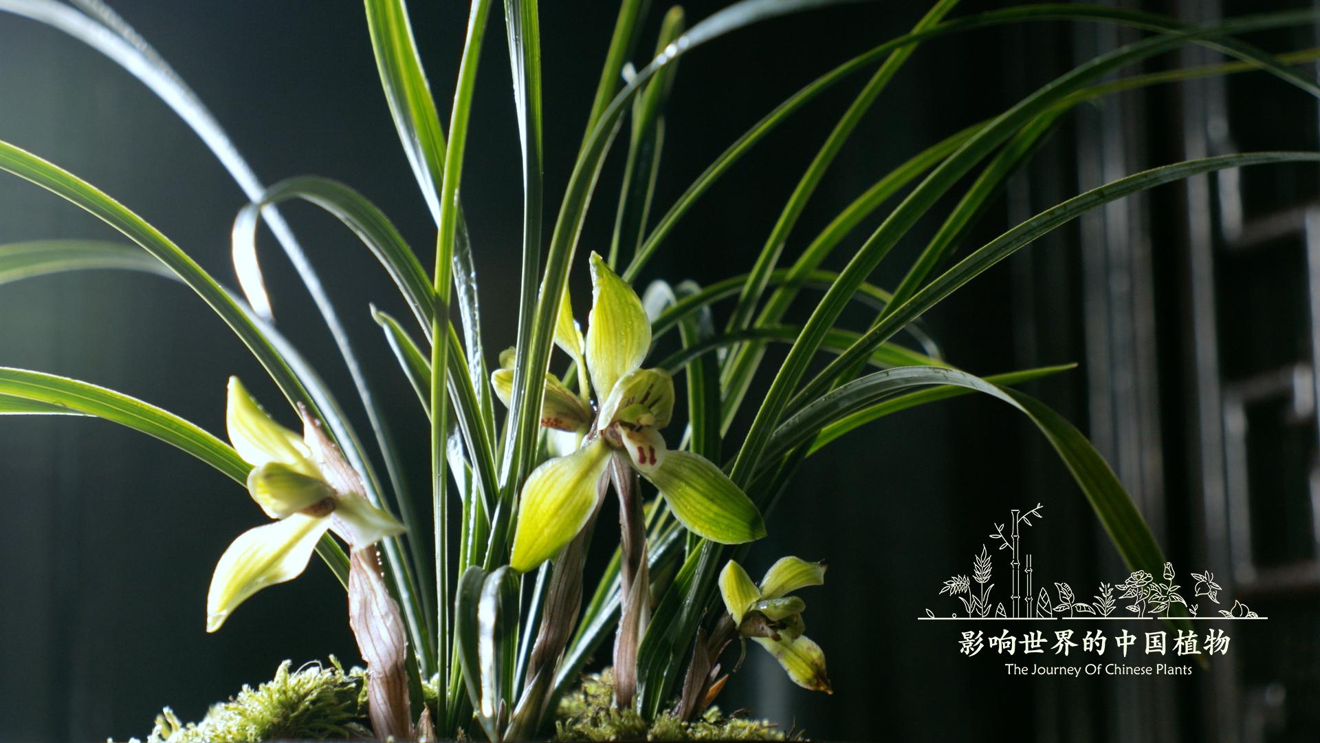 《影响世界的中国植物》美到让你重新认识大自然 豆瓣8.9的照片 - 4