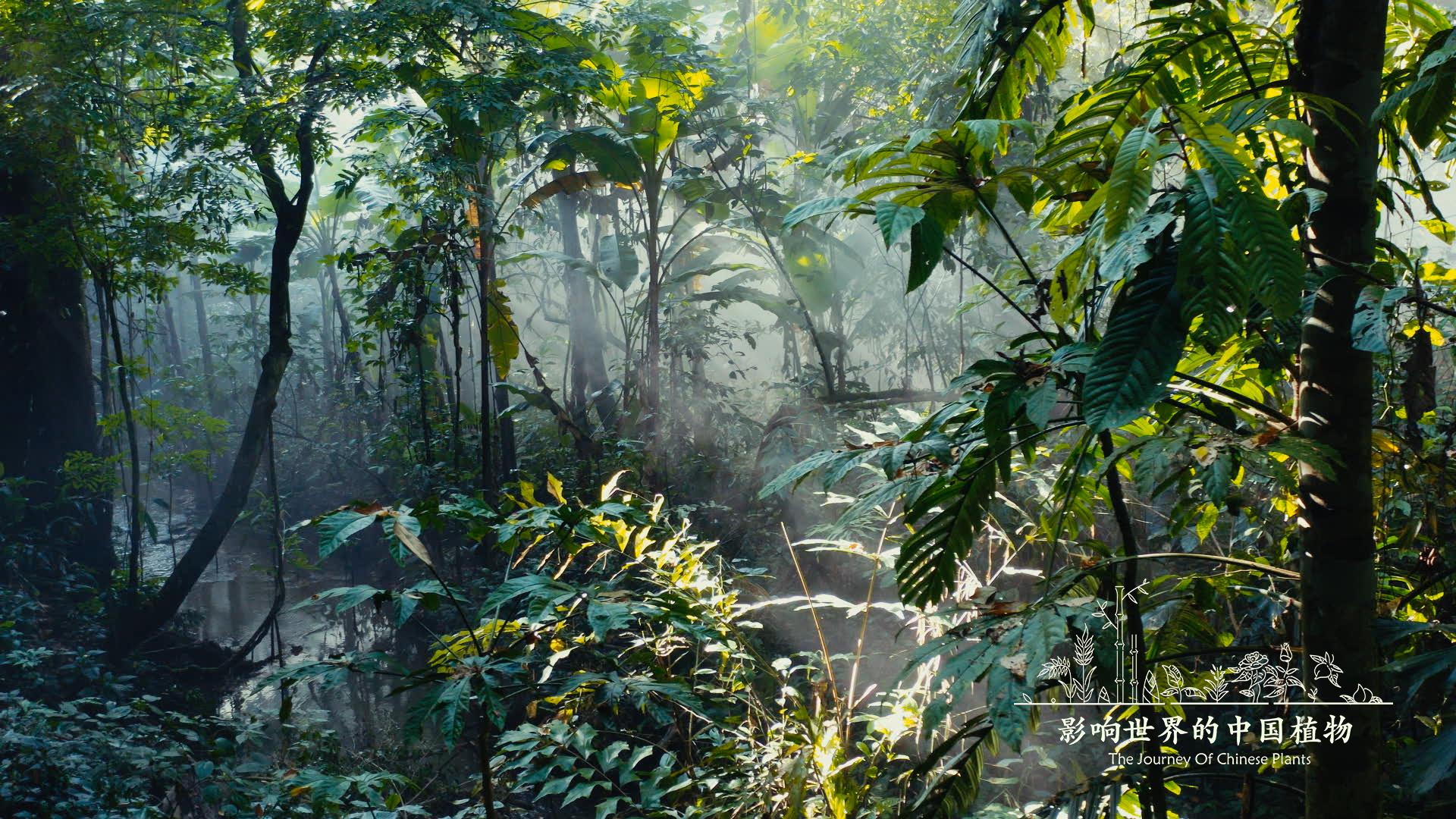 《影响世界的中国植物》美到让你重新认识大自然 豆瓣8.9的照片 - 8