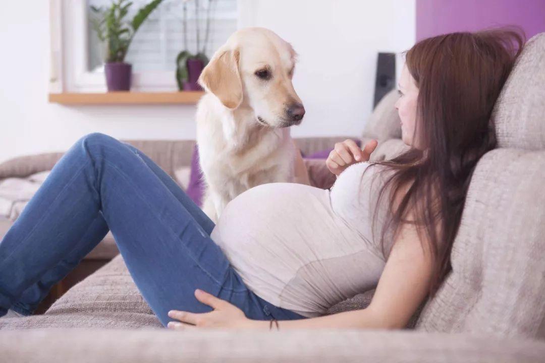 婆婆把儿媳养了 7 年的狗扔了,儿媳转头打掉 3 个月的孩子