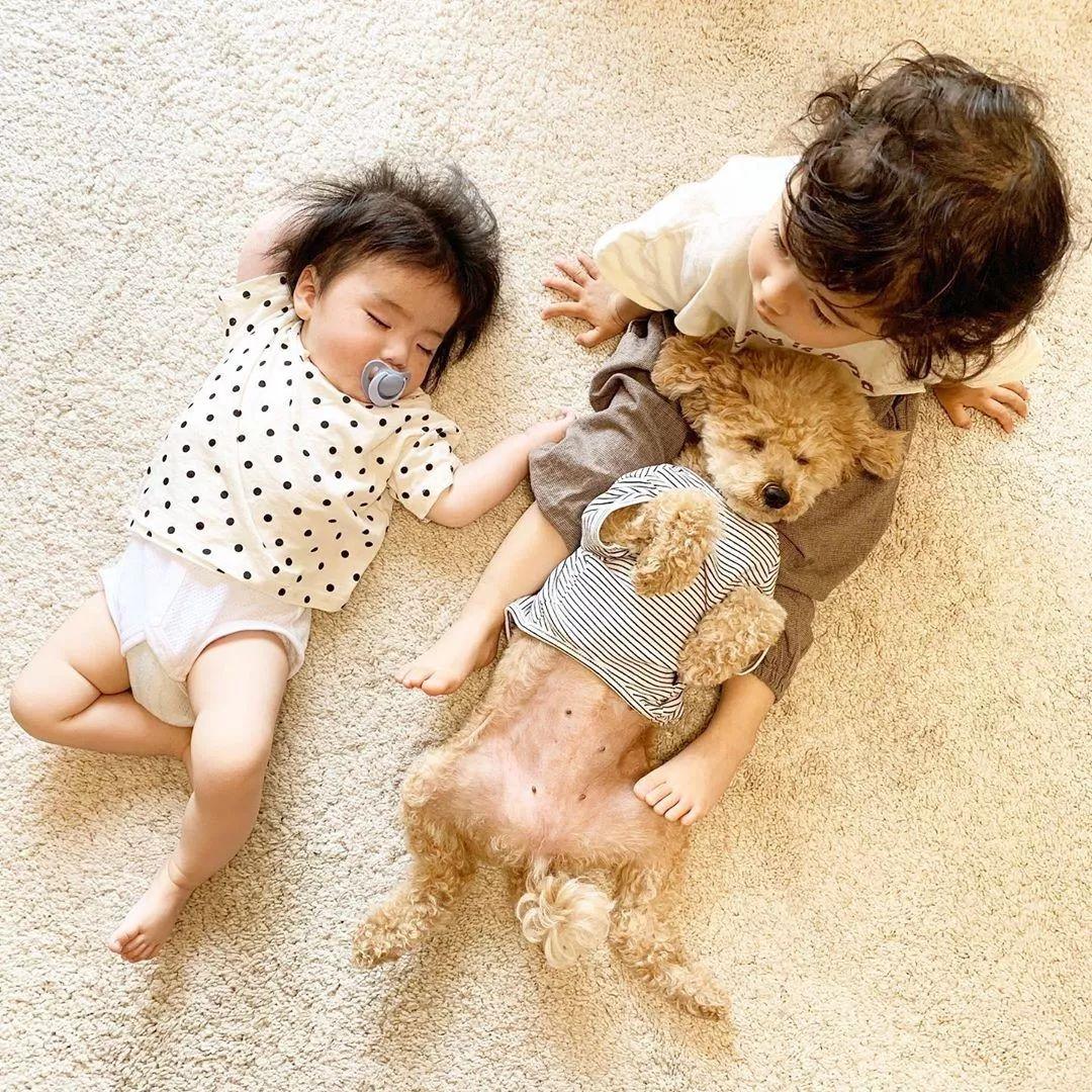 一组狗狗和孩子的合照火了