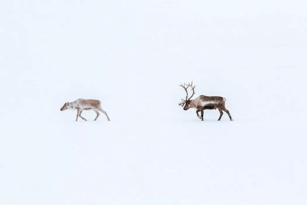 北极圈宝贝动物
