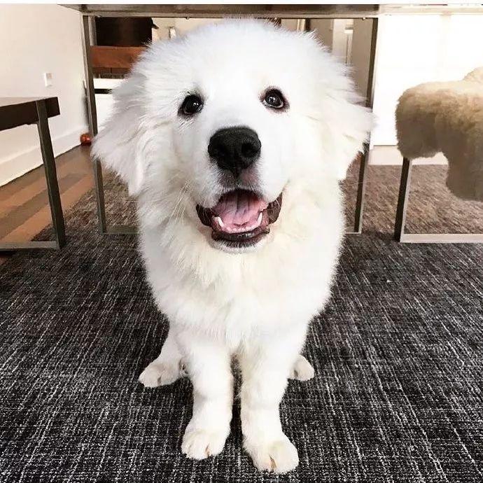 为啥想不开,要养大白熊?