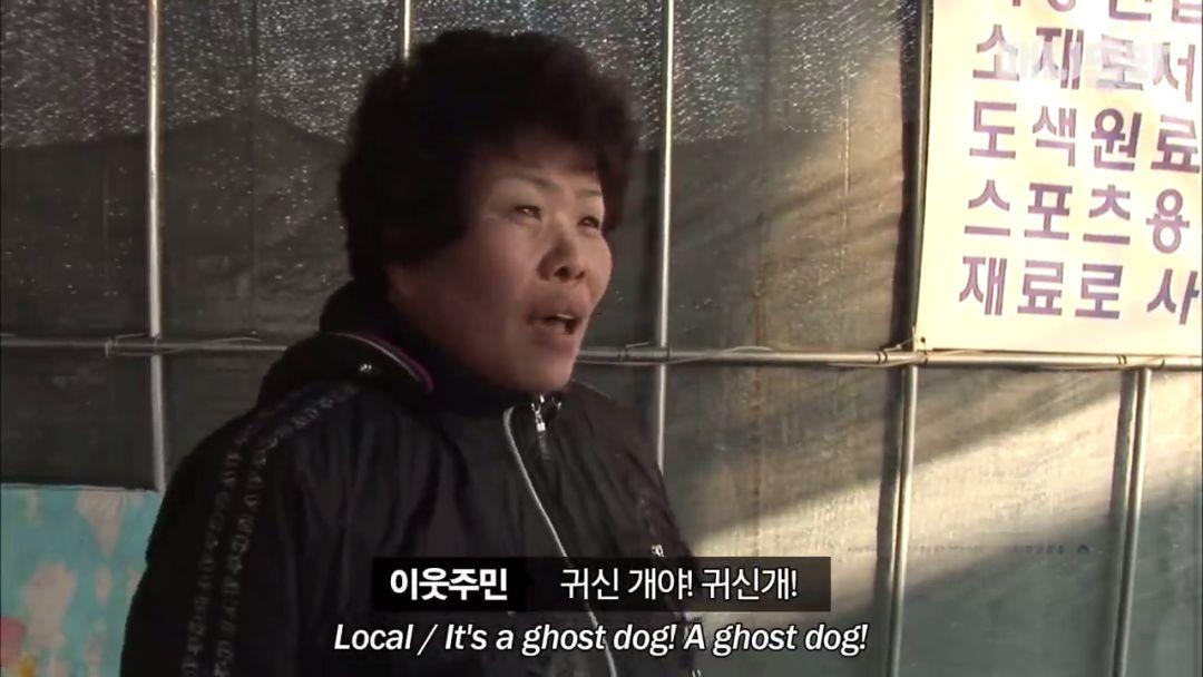 """被""""幽灵犬""""诅咒的小镇,8年来怪事不断,最后竟然……"""