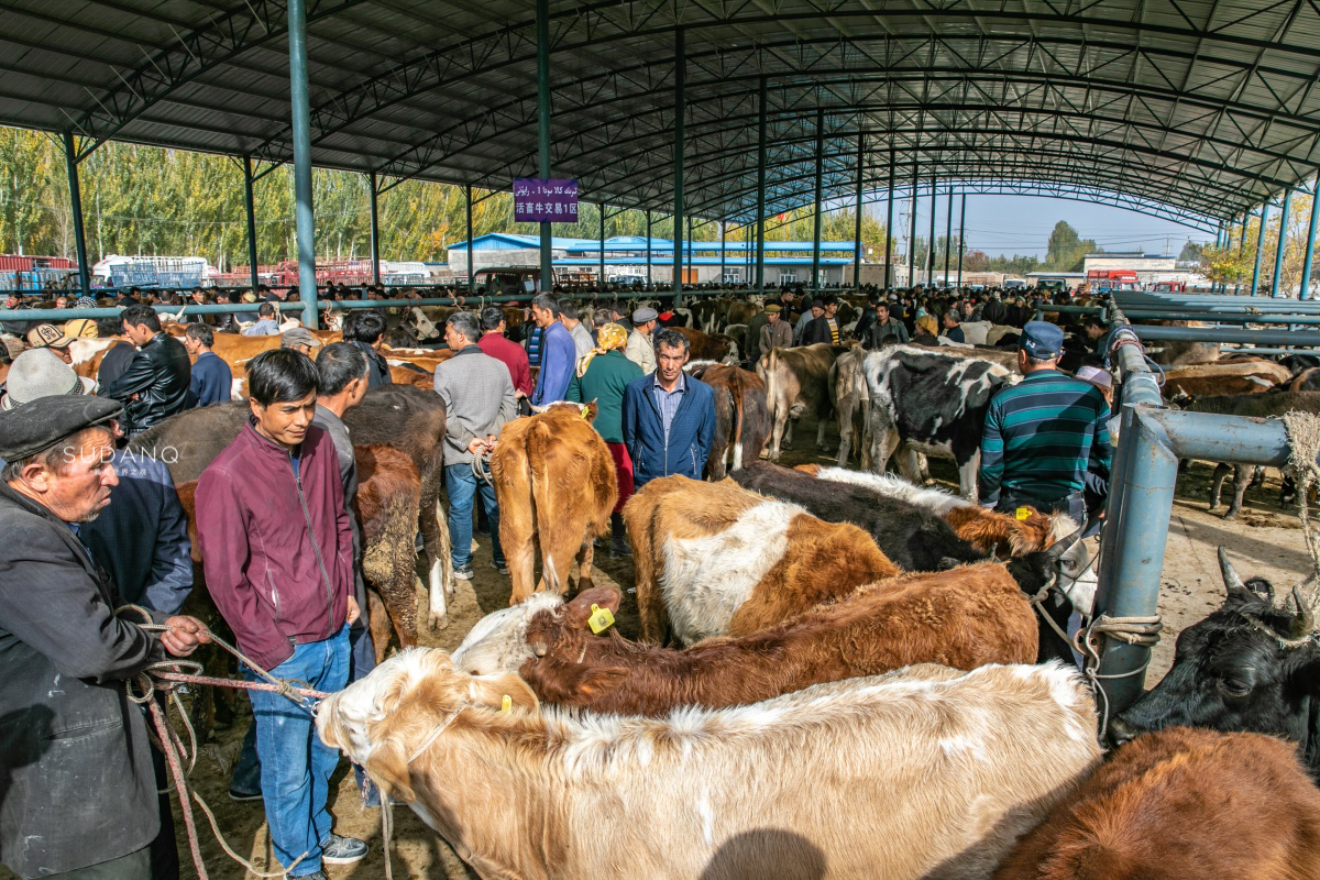 这样的新疆市场见过吗?重现西域古国的商贸交易,一只肥羊700块
