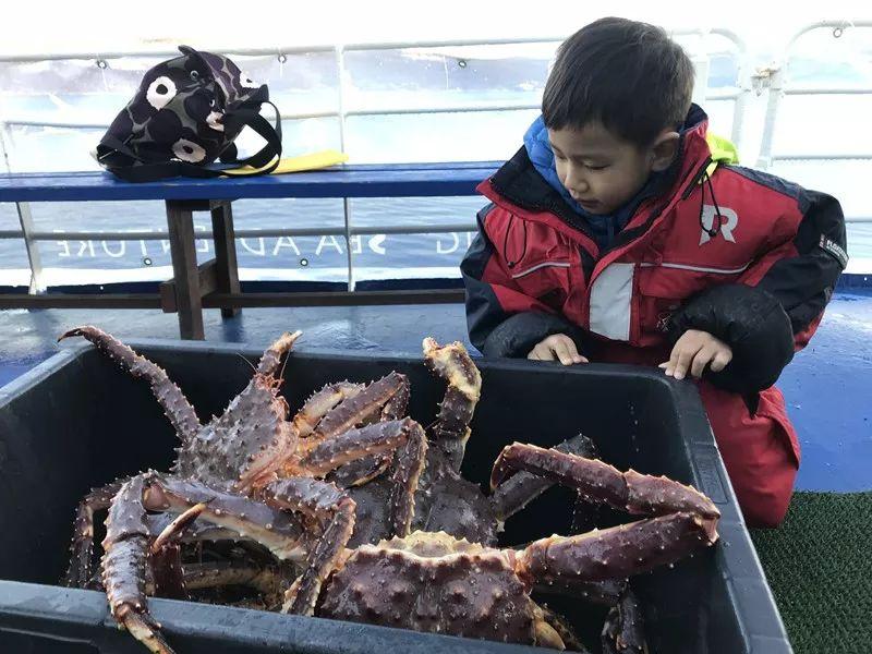 继续往北  遇到人生中最老的蟹