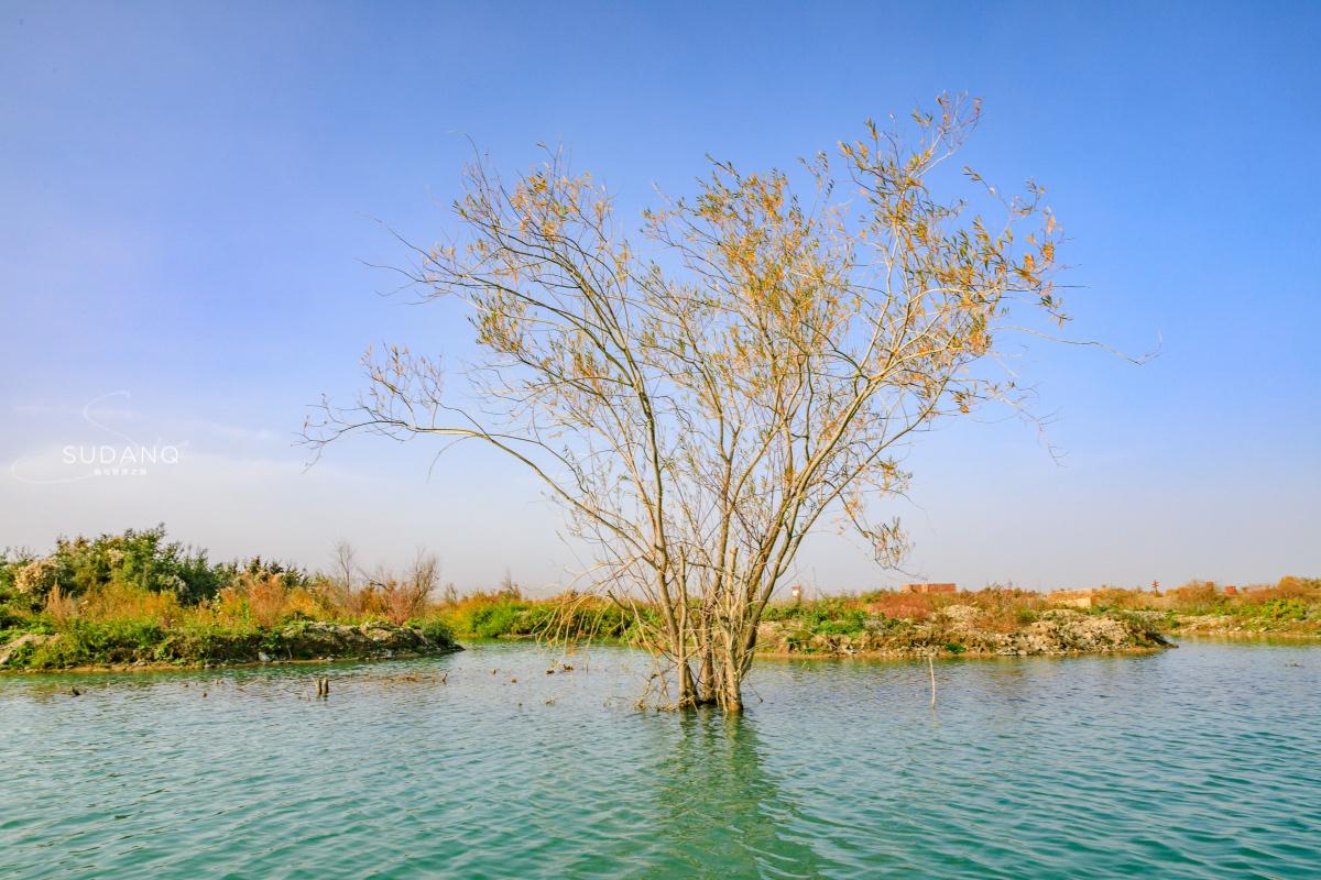 """这是非常古老的一种植物,藏于""""地球之肾"""",成吉思汗必备膳食"""