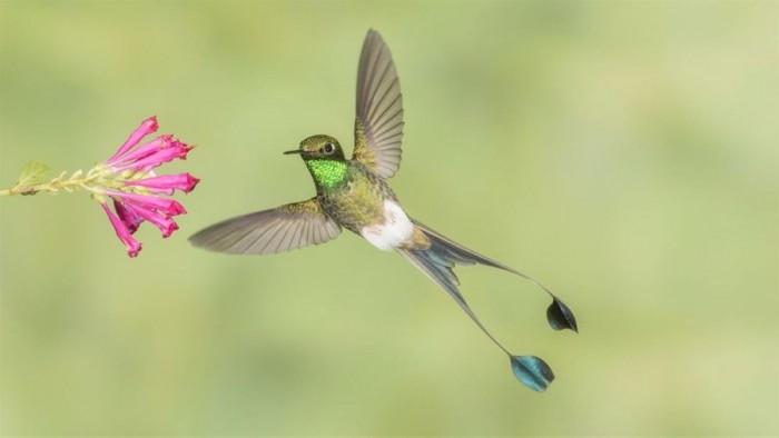 Win10蜂鸟主题4K高质量免费壁纸包的照片 - 4