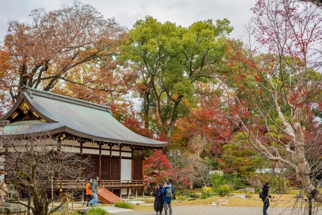 日本赏枫 | 2019年日本赏枫攻略,不要错过今年的红叶季!