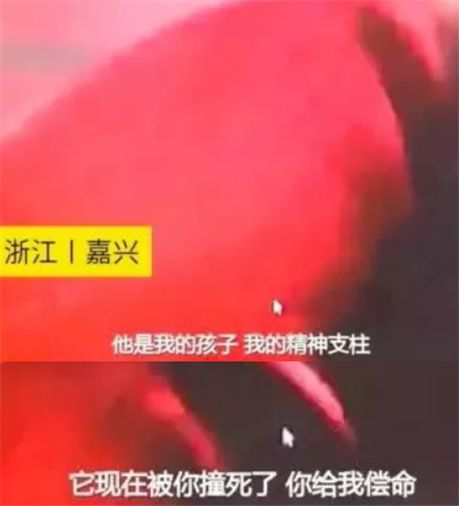 """孙俪发微博:""""大多数走丢的狗狗,都是因为没有狗绳。"""""""