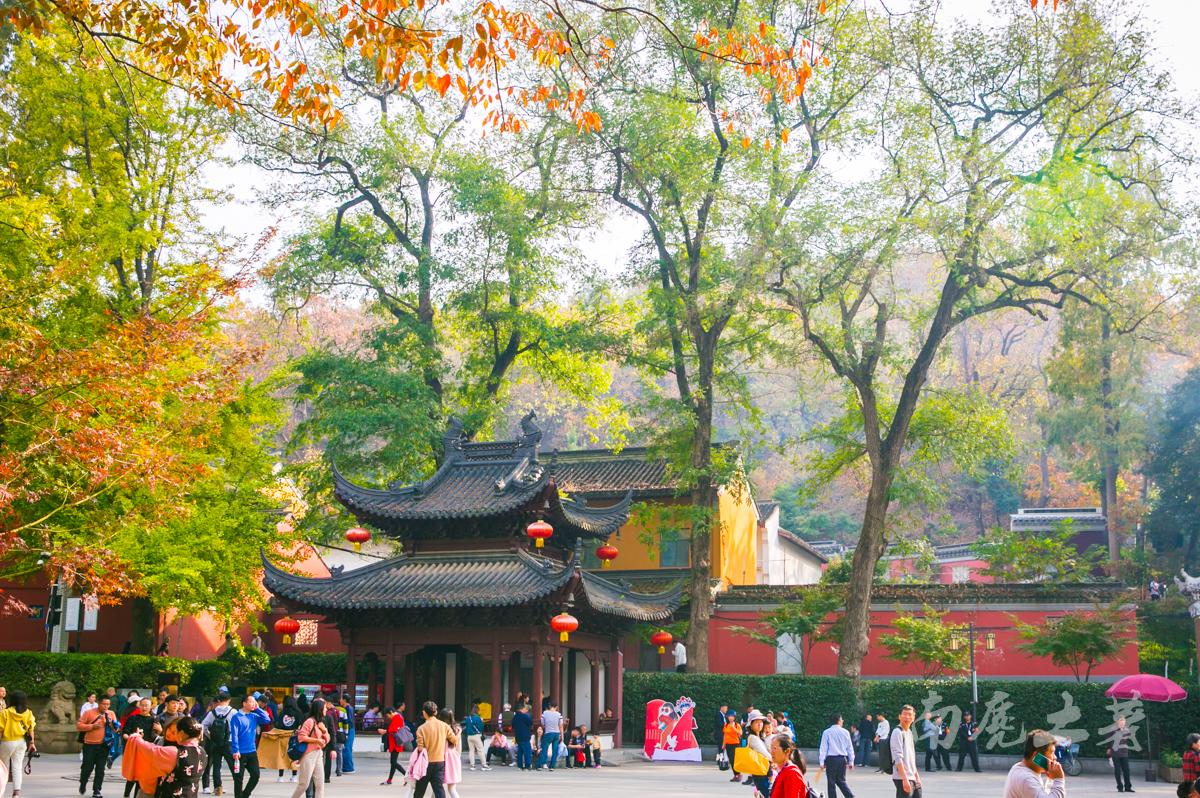 四大赏枫地,秋风起,南京变金陵