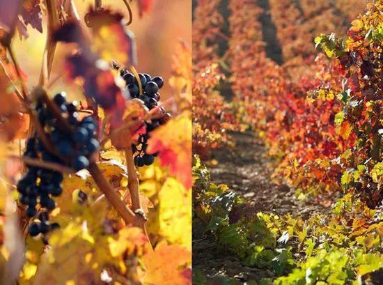 青岛西班牙语马老师:西班牙葡萄酒的发现之旅_中欧新闻_欧洲中文网