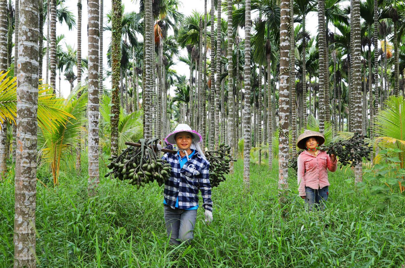 """""""三棵树""""战略赋能 """"槟榔经济""""有望创造更多惊喜"""