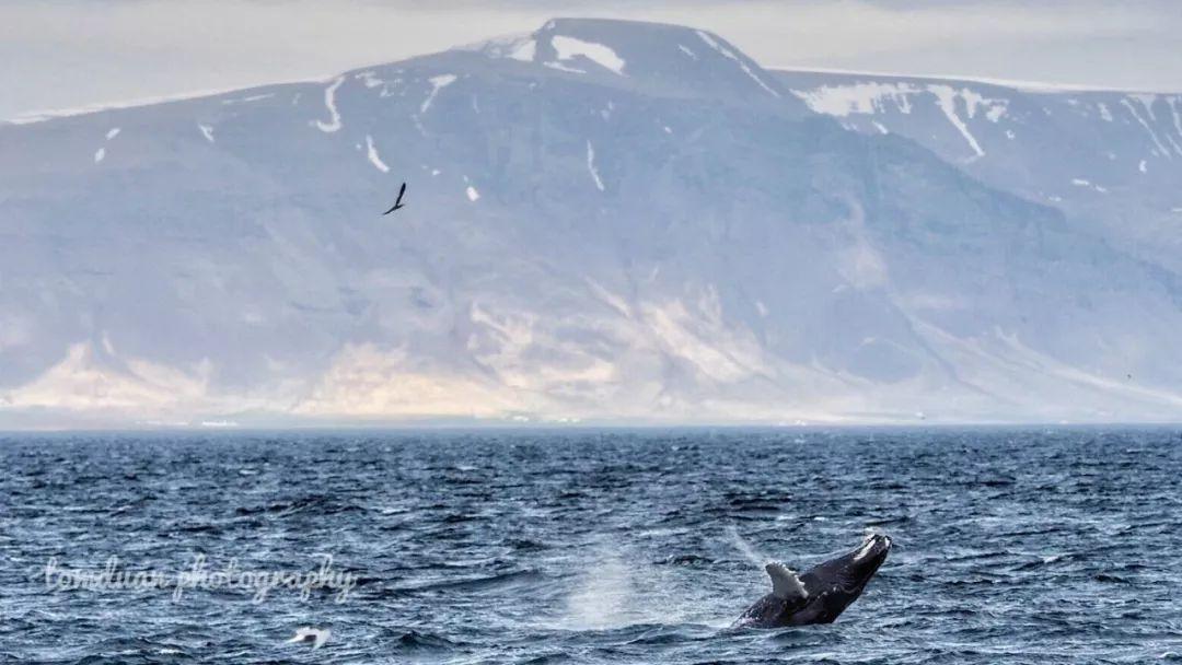 挪威特罗姆瑟 出海观鲸