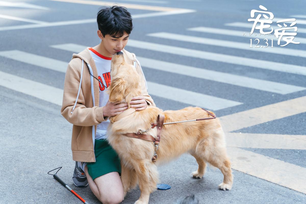 """《宠爱》曝""""守护""""版预告  张子枫当吴磊的眼睛"""
