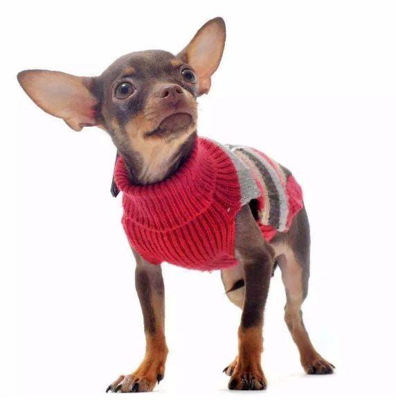 冬天遛狗别大意,路上隐藏的危害你知道吗?