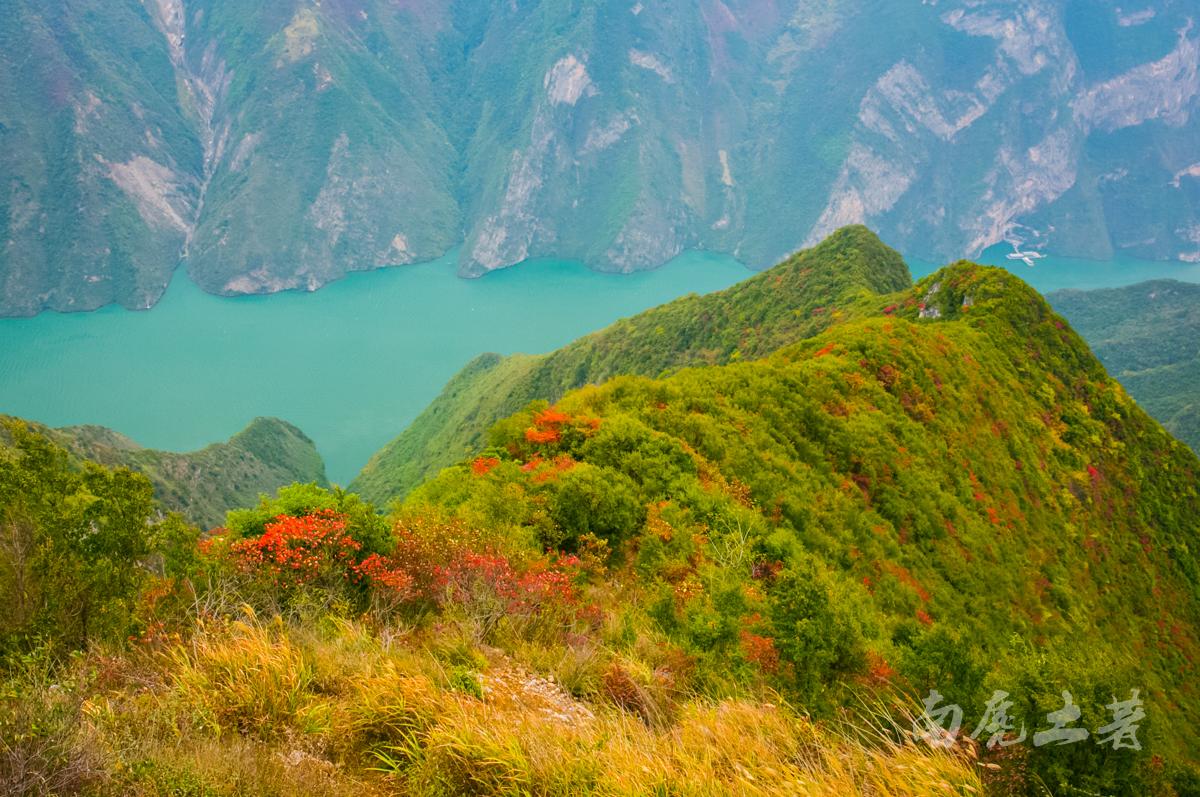 巫峡之巅新开一条神女天路,带你看三峡最美的红叶