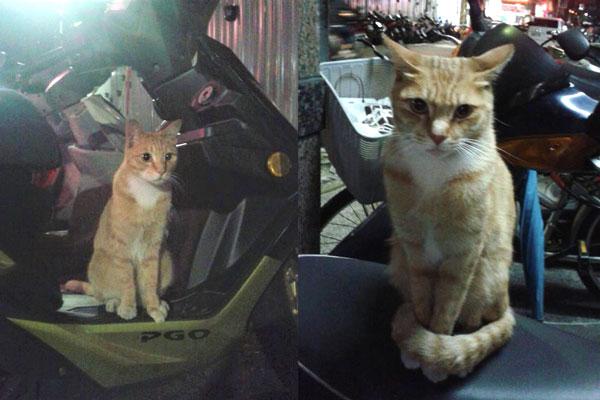 流浪猫被同类欺负到与蟑螂为伴,到了新家却被一只母猫捧在手心里