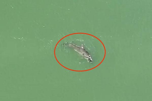 """男子见海豚捕到一条""""大鱼""""拍手叫好,看清模样后瞬间眼睛湿了"""