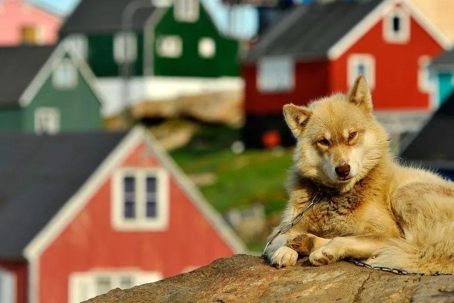 格陵兰岛伊卢利萨特