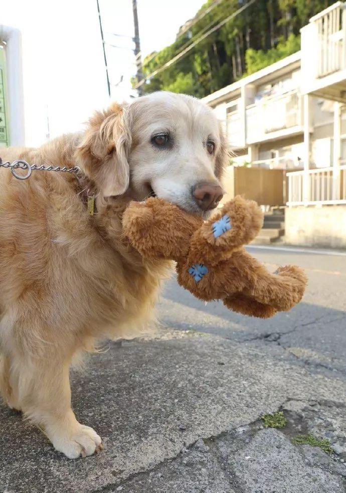 养了狗之后,才发现快乐其实都是偷来的…