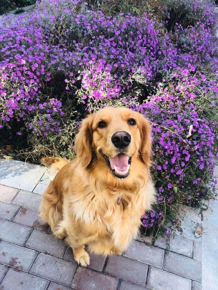 如果有一分钟的时间,让狗狗能听懂你说的话,你会说什么?