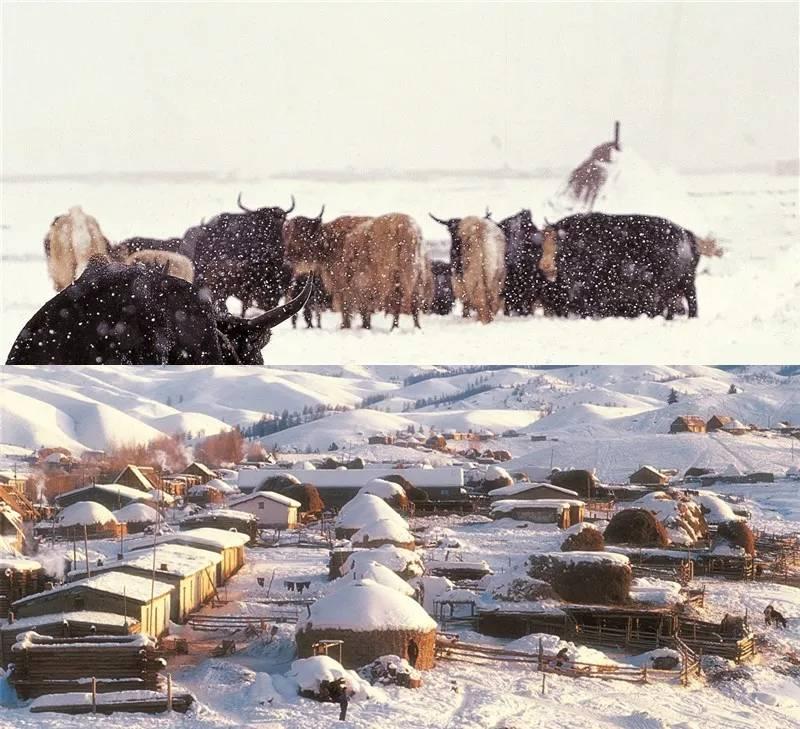 喀纳斯的冬天是一个黑白分明的世界,霸占了中国冬天一大半的美