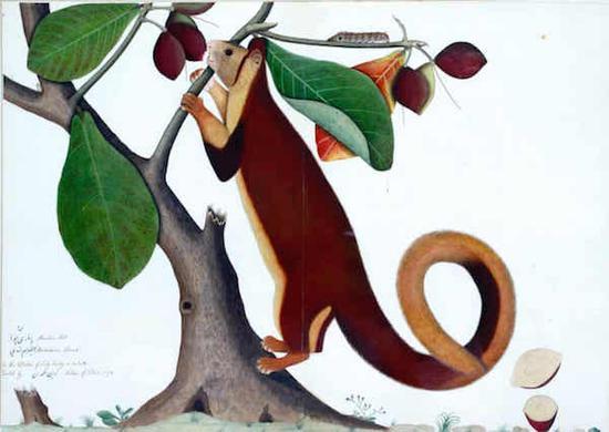 印度插畫:那些生動明亮的果蝠松鼠